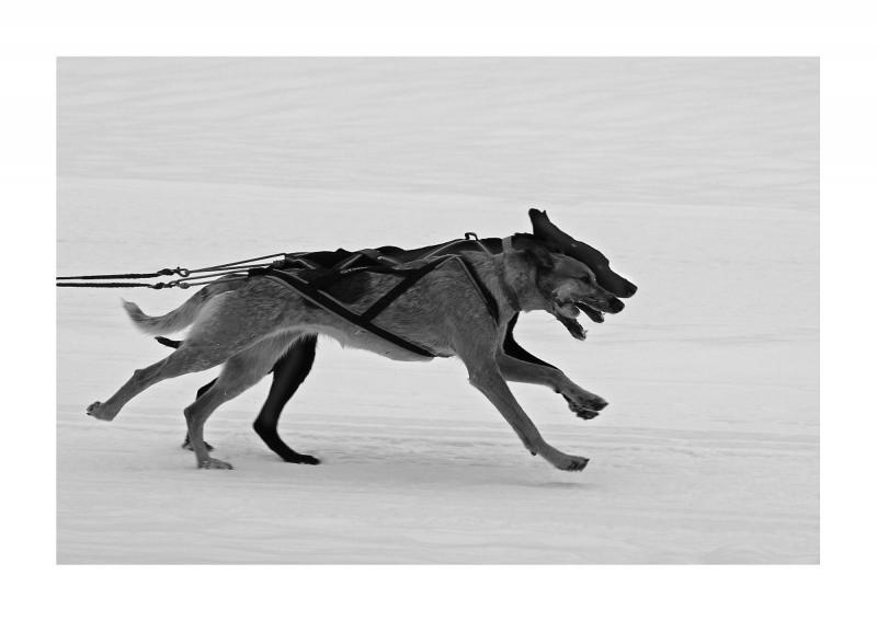 005sw Hunde