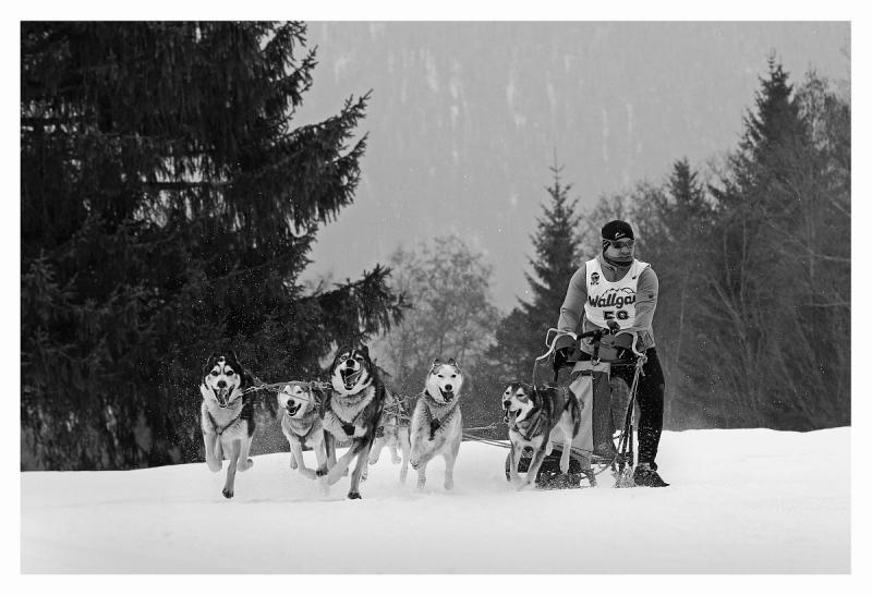 008sw Hunde