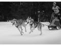 003sw Hunde
