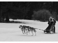 004sw Hunde
